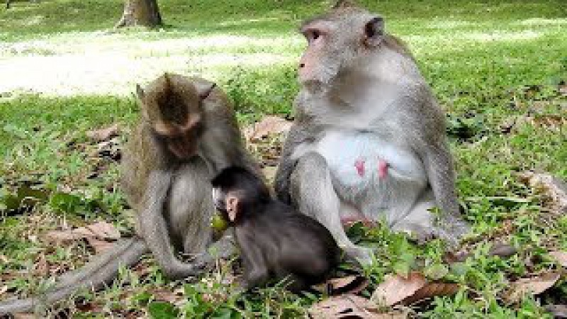 She look and love cute baby monkey playing, monkeys 1027 Tube BBC