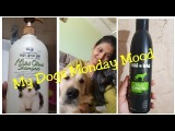 My dogs Monday Mood Vlog  FORBIS  &amp HUG N WAG SHAMPOO FOR DOGS Cats REVIEW
