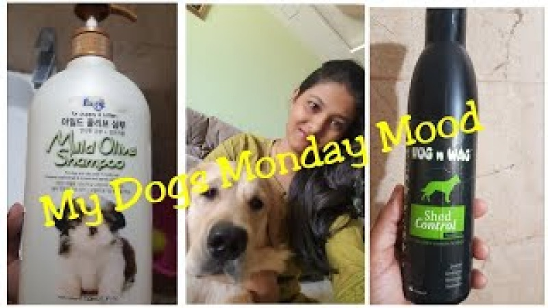 My dogs Monday Mood Vlog / FORBIS HUG N WAG SHAMPOO FOR DOGS Cats REVIEW