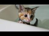 Kitten's first bath