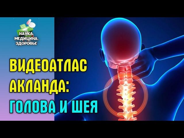 Анатомия человека. Видеоатлас доктора Акланда. Голова и шея - удержание и движение