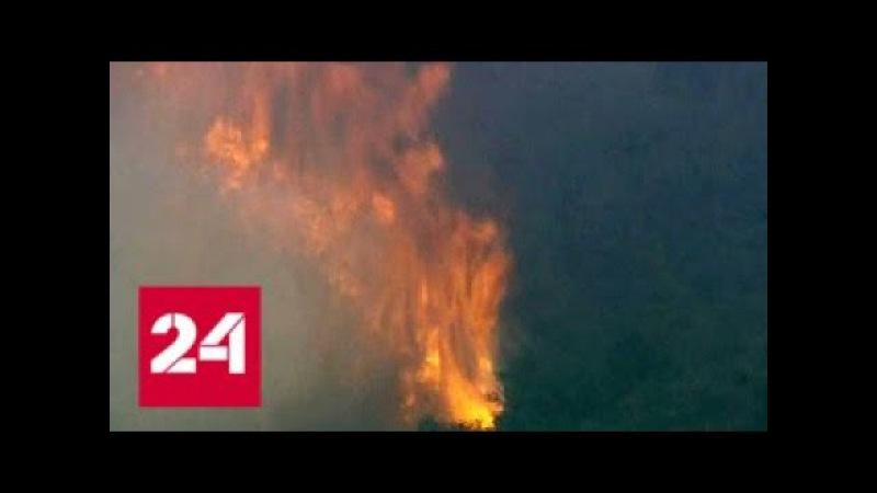 Площадь пожара Томас В Калифорнии составляет уже более тысячи квадратных километров - Россия 24