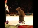 Даже медведь может ездить на этом, но не я