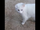 Встретили красавца-кота