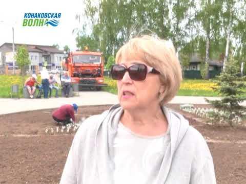 На клумбах города Конаково высадили цветы