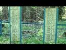 В заболоченных лесах Чудовского района Новгородской области