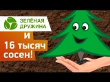 Зелёная дружина СГК высадила в Кемерове 16 000 сосен!