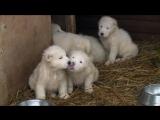 Минобороны РФ поздравило россиян с Новым годом трогательным видео со щенками