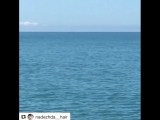 прогулки по набережной, дельфины