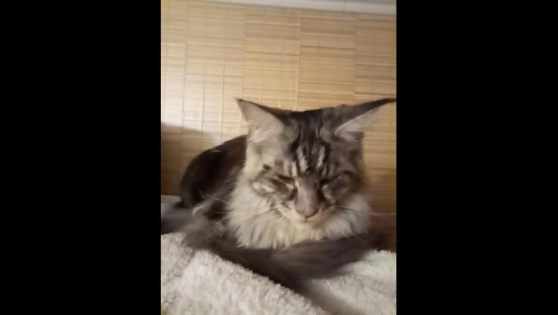 Кот в укромном месте на шкафу