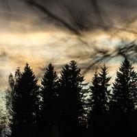 Алевтина Басова  Тёмный Лес