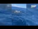 Акулы чуть не съели людей