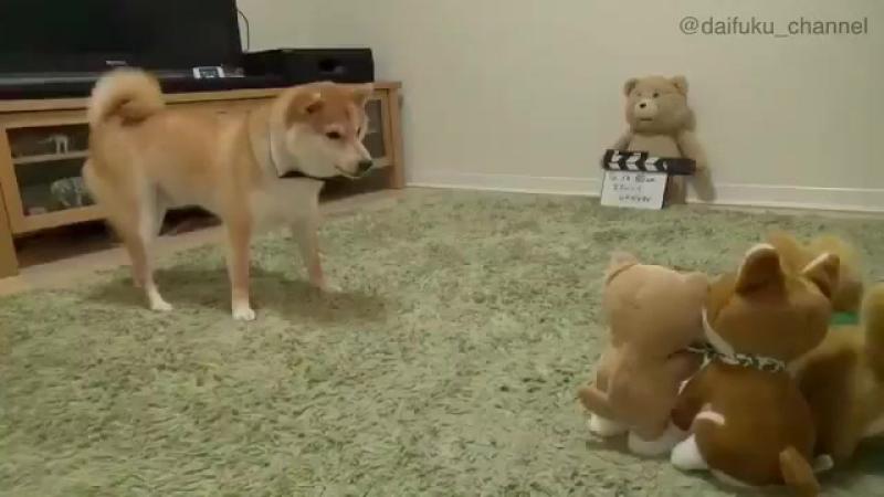 Zabawka powtarzająca dźwięki i poważnie zdezorientowany pies