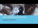 Охота в Якутии Пушной промысел - Особенности охоты на Руси