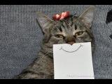 Смешные кошки и коты Приколы про кошек и котов ТОПовая ПОДБОРКА январь 2018 Funny Cats C...