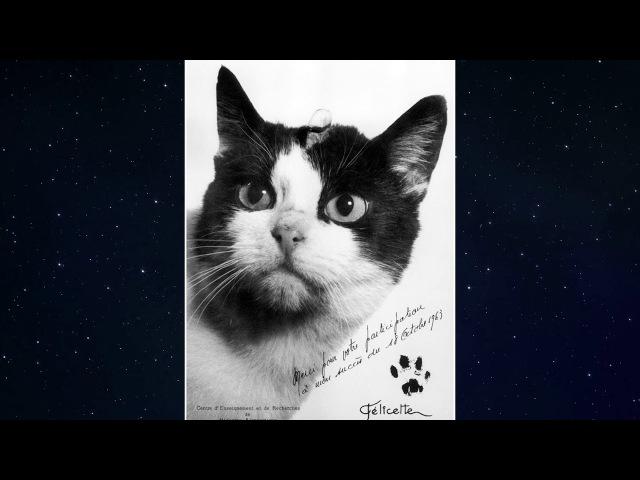 Félicette Astrocat