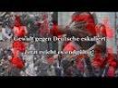 Gewalt gegen Deutsche eskaliert Jetzt reicht es endgültig! KlareSicht14
