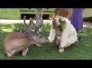 Our wild deer friend Yoda - surprisingly calm - ASMR