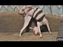 Смешные кошки коты и собаки Приколы про кошек и собак Топовая подборка приколы с...