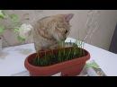 Кошка кушает травку! 🌱🌱🌱🐱🐱🐱