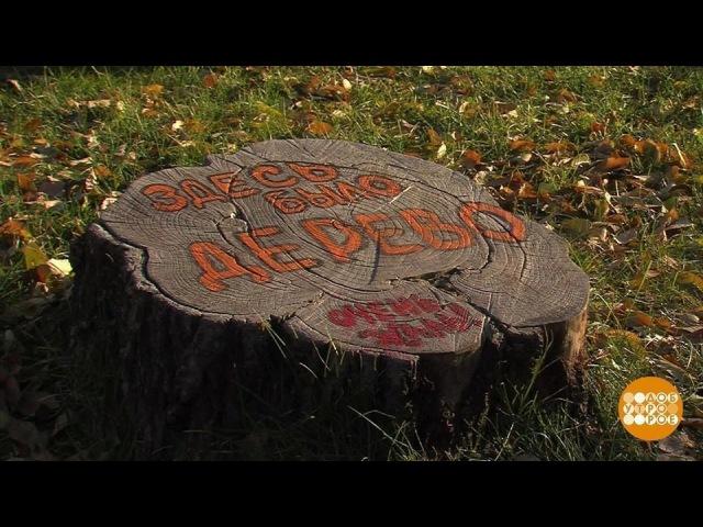 Деревья как арт-объект. Доброе утро. Фрагмент выпуска от24.10.2017