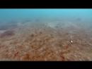 BBC Голубая планета 5 Сезонные моря Познавательный природа животные 2001