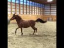 лошадь-футболист из серии смешные лошади