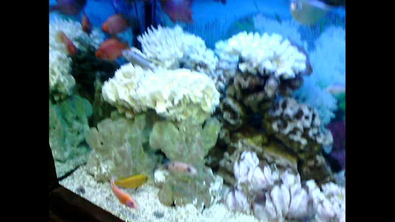 Рыбки Центра Marilyn Kerro 🐡🐠🐟