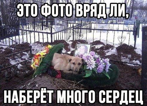 Фото 309715184