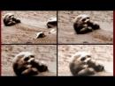 Копия видео Аномалии 2017 и дыра на Марсе