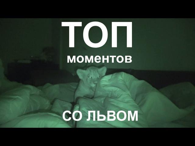 Смешные коты (Лев Бураном)! Подборка 2017