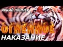 Огненное Наказание Яркий Пример. Астролог Дарья Высоцкая.