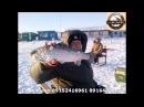 Ловля Форели Приманки для ловли Форели Рыбалка в Подмосковье