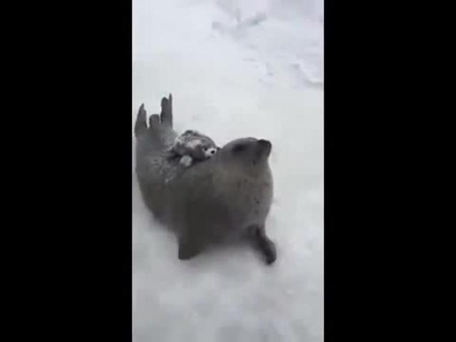 Run seal run
