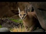 Скорость жизни. Красота и жестокость природы. Молниеносные атаки хищников. Discovery HD 29.11.2016