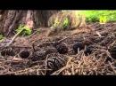 Невидимая природа Сила растений Серия 3