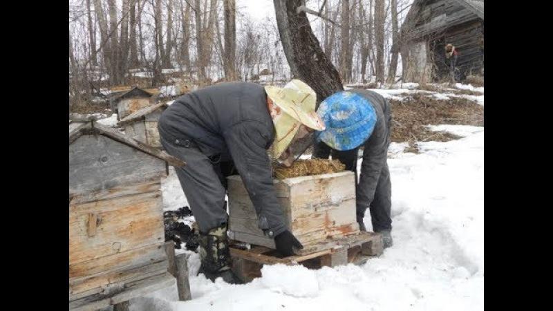 Когда выставлять пчёл. Время выставки пчёл.
