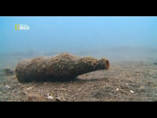 Глубины океана. Подводный мир. Документальный фильм. national geographic, nat geo wild, discovery.