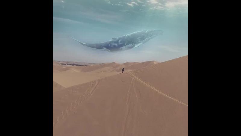 EndER - Сны кита (desert edit)