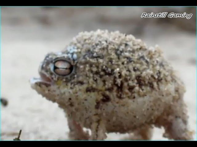 Singing Frog Vitas