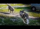 счастливые собаки =)