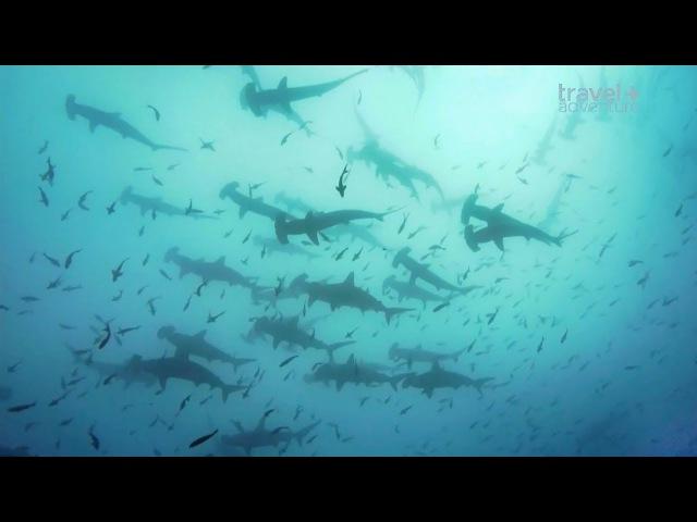 Подводное приключение у острова Кокос.