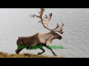 Цигун. Игры пяти животных. Бегущий олень.