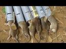 Trampas para ratas versión 2 chico inteligente crear nuevas trampas para ratas con tubos de PVC