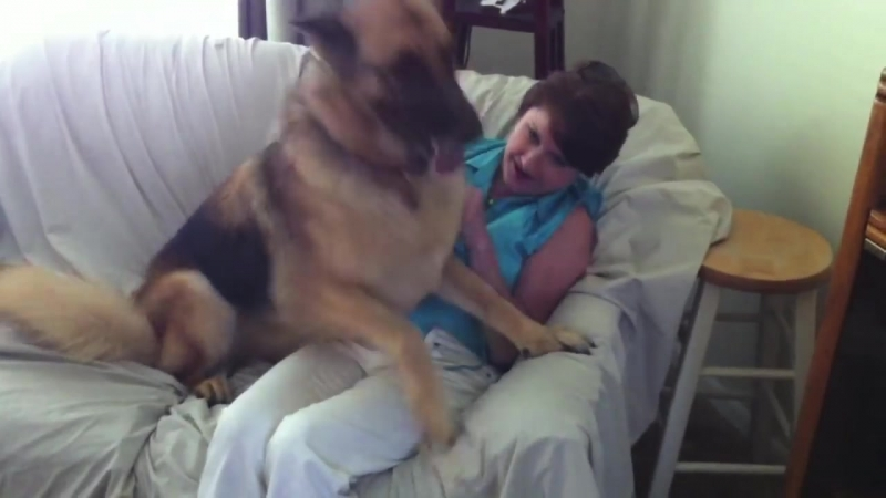German Shepherd-Owner Reunion After One Day.
