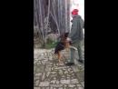 Абхазия дружелюбные собаки возле храма в Лыхны
