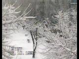 Однажды утром в Пензе, пошел густой снег.:) 20 лет назад.