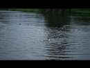 00737 Охота на уток