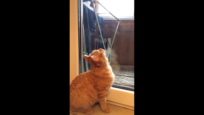Лазарус о кошачьем Боге