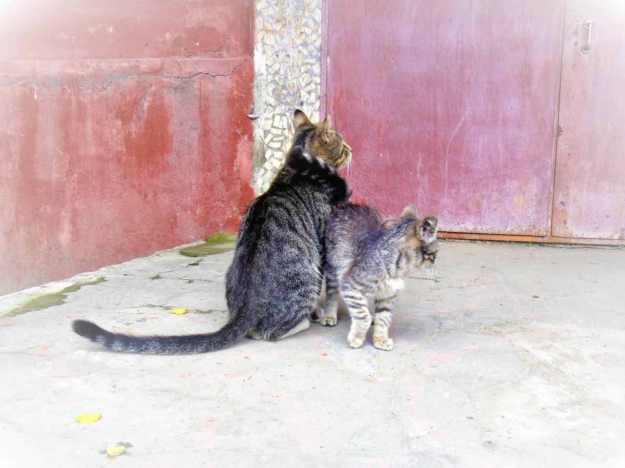 кот с котенком на подъезде
